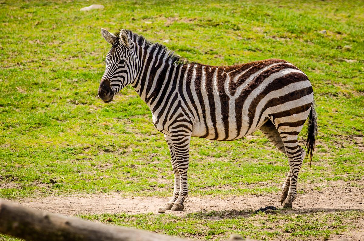 ystads djurpark